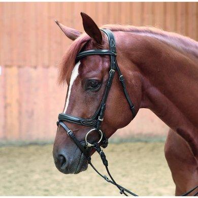 Kavalkade Hoofdstel Ivy Combi Neusriem Zwart Pony