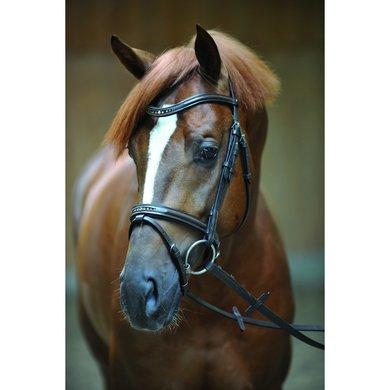 Kavalkade Hoofdstel Estella englCombi Neusriem Bruin Pony
