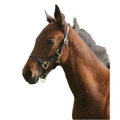 Pfiff Foal Leather Halter Black Foal