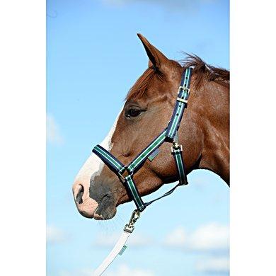 Bucas Foal Halter Dublin Striped Navy Veulen