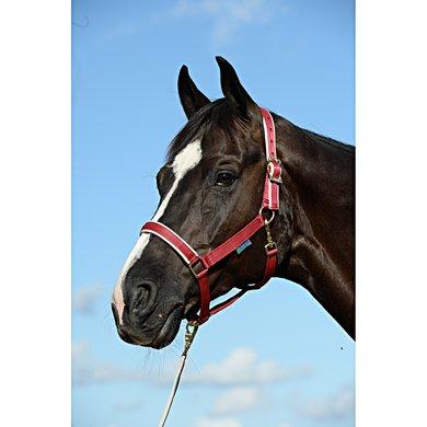 Bucas Foal Halter Dublin Ruby Veulen
