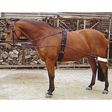 Harrys Horse Lunging System