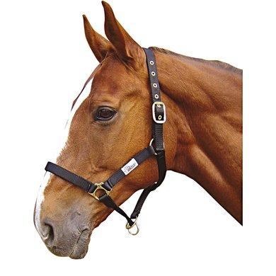 Harrys Horse Controller Halster Zwart