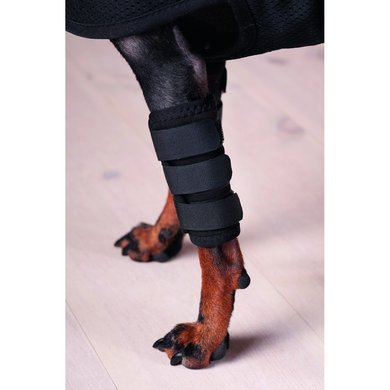 Back on Track Peesbeschermer Hond met Klitteband Zwart