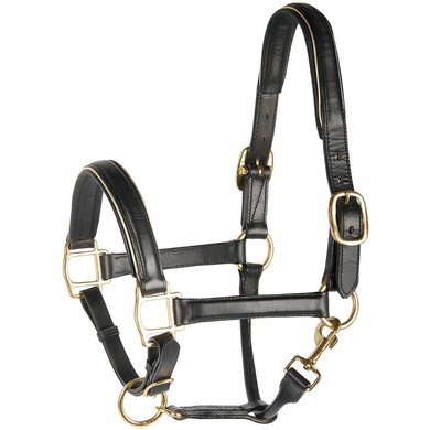 Harrys Horse Head Collar Leather with Piping Gold
