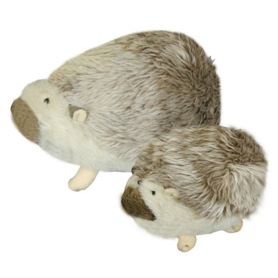 American Wild Hedgehog large