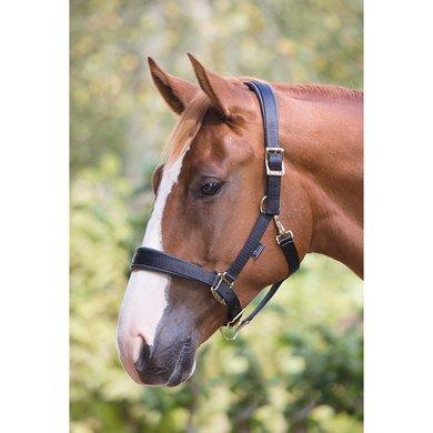 Shires Headcollar Deluxe Padded Black