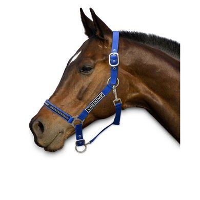 Chetaime Safety First Halster Royal Blue Pony