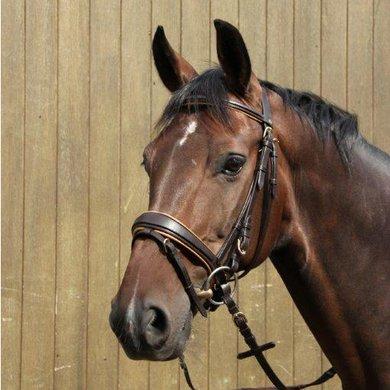 Rider Pro Trense London Deluxe Dunkelbraun Pony