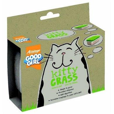 Kitty Grass Kattengras