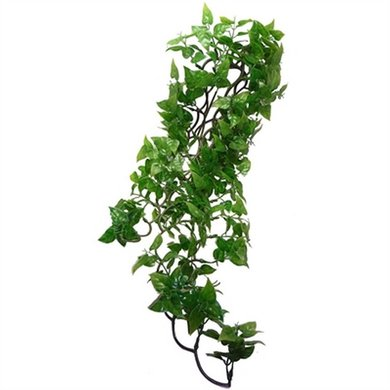 Komodo Philodendron Plant 72cm