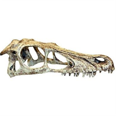 Komodo Raptor Schedel 11.5x25x9.5cm L