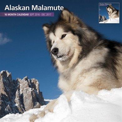 Magnetsteel Kalender 2017 Alaskan Malamute Traditi 30x30cm