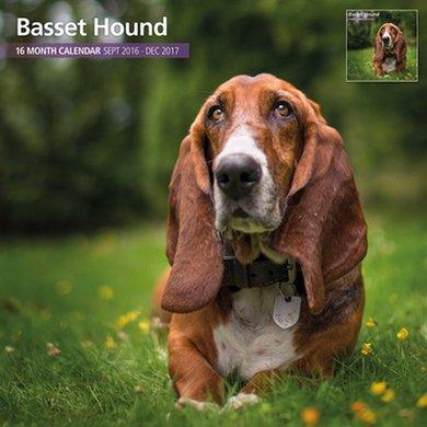 Magnet&steel Kalender 2017 Basset Hound Traditioneel 30x30cm