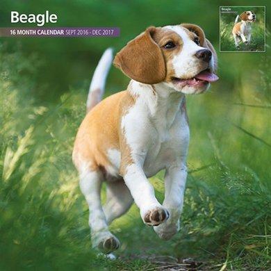Magnetsteel Kalender 2017 Beagle Traditioneel 30x30cm