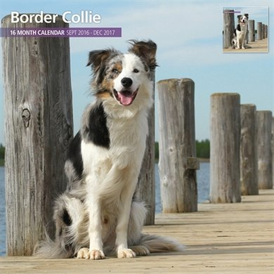 Magnetsteel Kalender 2017 Border Collie Traditi 30x30cm