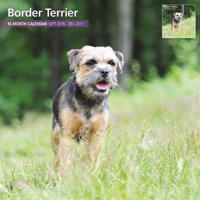 Magnet&steel Kalender 2017 Border Terrier Traditi 30x30cm