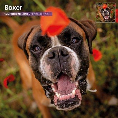 Magnet&steel Kalender 2017 Boxer Traditioneel 30x30cm