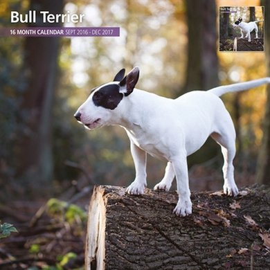Magnet&steel Kalender 2017 Bull Terrier Traditioneel 30x30cm