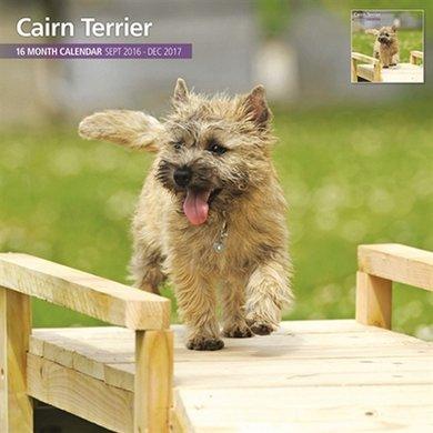 Magnet&steel Kalender 2017 Cairn Terrier Traditi 30x30cm
