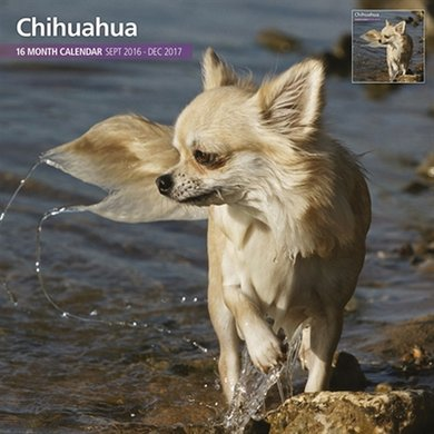 Magnet&steel Kalender 2017 Chihuahua Traditioneel 30x30cm