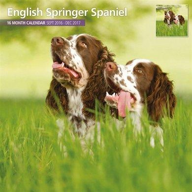Magnet&steel Kalender 2017 English Springer Spaniel 30x30cm