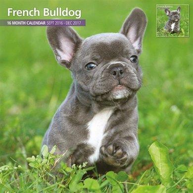 Magnet&steel Kalender 2017 Franse Bulldog Traditi 30x30cm