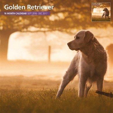 Magnet&steel Kalender 2017 Golden Retriever Traditi 30x30cm