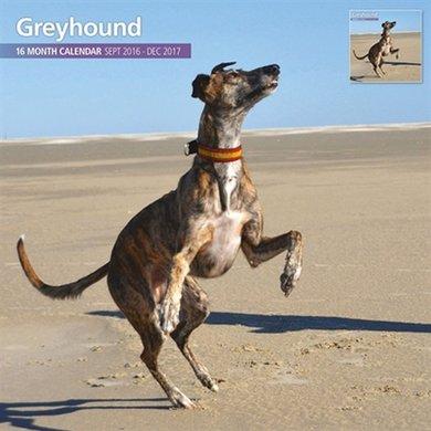 Magnetsteel Kalender 2017 Greyhound Traditioneel 30x30cm