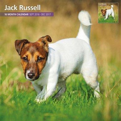 Magnet&steel Kalender 2017 Jack Russel Traditioneel 30x30cm