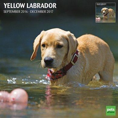 Magnet&steel Kalender 2017 Labrador Blond Traditi 30x30cm