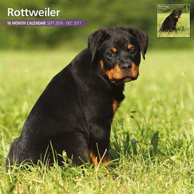 Magnetsteel Kalender 2017 Rottweiler Traditioneel 30x30cm
