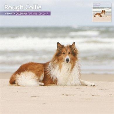 Magnetsteel Kalender 2017 Schotse Collie Traditi 30x30cm