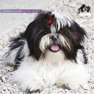 Magnetsteel Kalender 2017 Shih Tzu Traditioneel 30x30cm