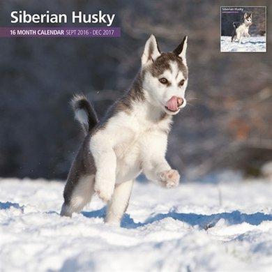 Magnet&steel Kalender 2017 Siberian Husky Traditi 30x30cm