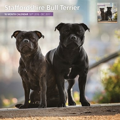 Magnet&steel Kalender 2017 Staffordshire Bullterrier 30x30cm
