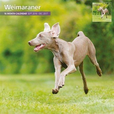 Magnetsteel Kalender 2017 Weimaraner Traditioneel 30x30cm
