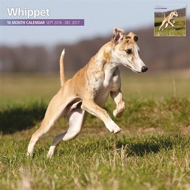 Magnetsteel Kalender 2017 Whippets Traditioneel 30x30cm