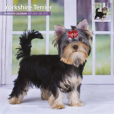 Magnetsteel Kalender 2017 Yorkshire Terrier Traditi 30x30cm