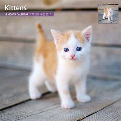 Magnetsteel Kalender 2017 Kittens Traditioneel 30x30cm