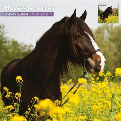 Magnet&steel Kalender 2017 Horses And Ponies Traditi 30x30cm