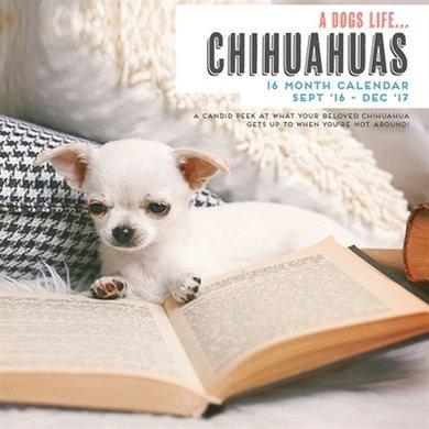 Magnetsteel Kalender 2017 Secret Life Of Chihuahuas 30x30cm