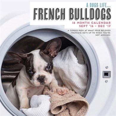 Magnet&steel Kalender 2017 Secret Life Frans Bulldog 30x30cm