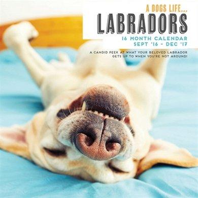 Magnet&steel Kalender 2017 Secret Life Of Labradors 30x30cm