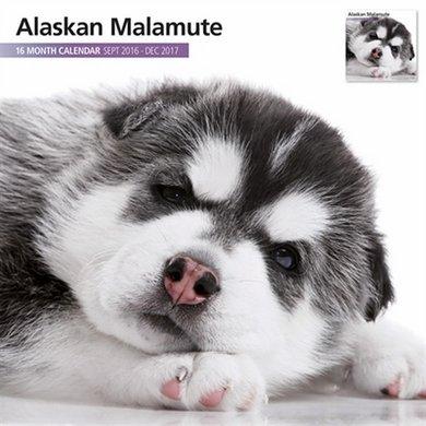 Magnet&steel Kalender 2017 Alaskan Malamute Modern 30x30cm