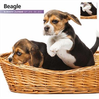 Magnet&steel Kalender 2017 Beagle Modern 30x30cm