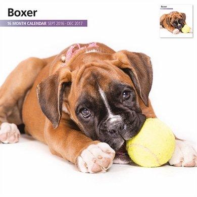 Magnet&steel Kalender 2017 Boxer Modern 30x30cm