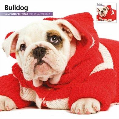 Magnet&steel Kalender 2017 Bulldog Modern 30x30cm