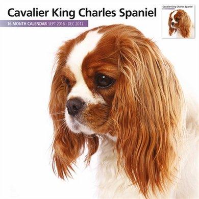 Magnetsteel Kalender 2017 Cavalier Kcharles Span M 30x30cm