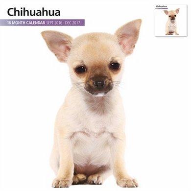 Magnetsteel Kalender 2017 Chihuahua Modern 30x30cm